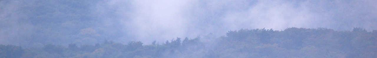 Nebel über den Wäldern im Rheinladn