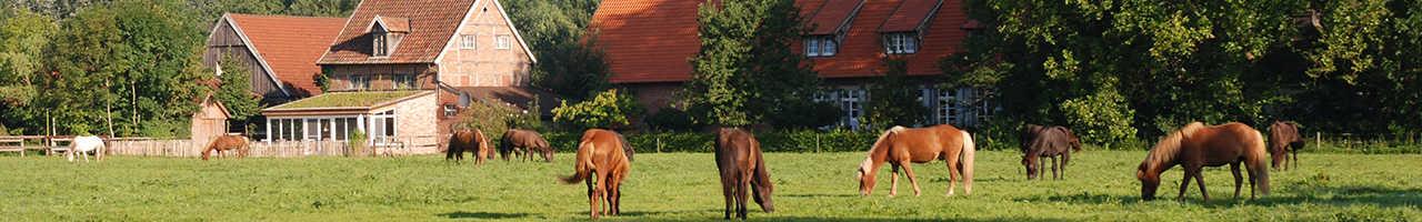 Ein Blick auf den Hof mit Pferden im Vordergund