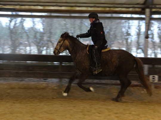 Sophia, unsere Mitarbeiterin mit dem Verkaufspferd, Hilla (sehr talentiert bei den Übungen!)