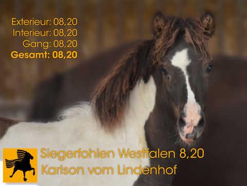 Karlson vom Lindenhof